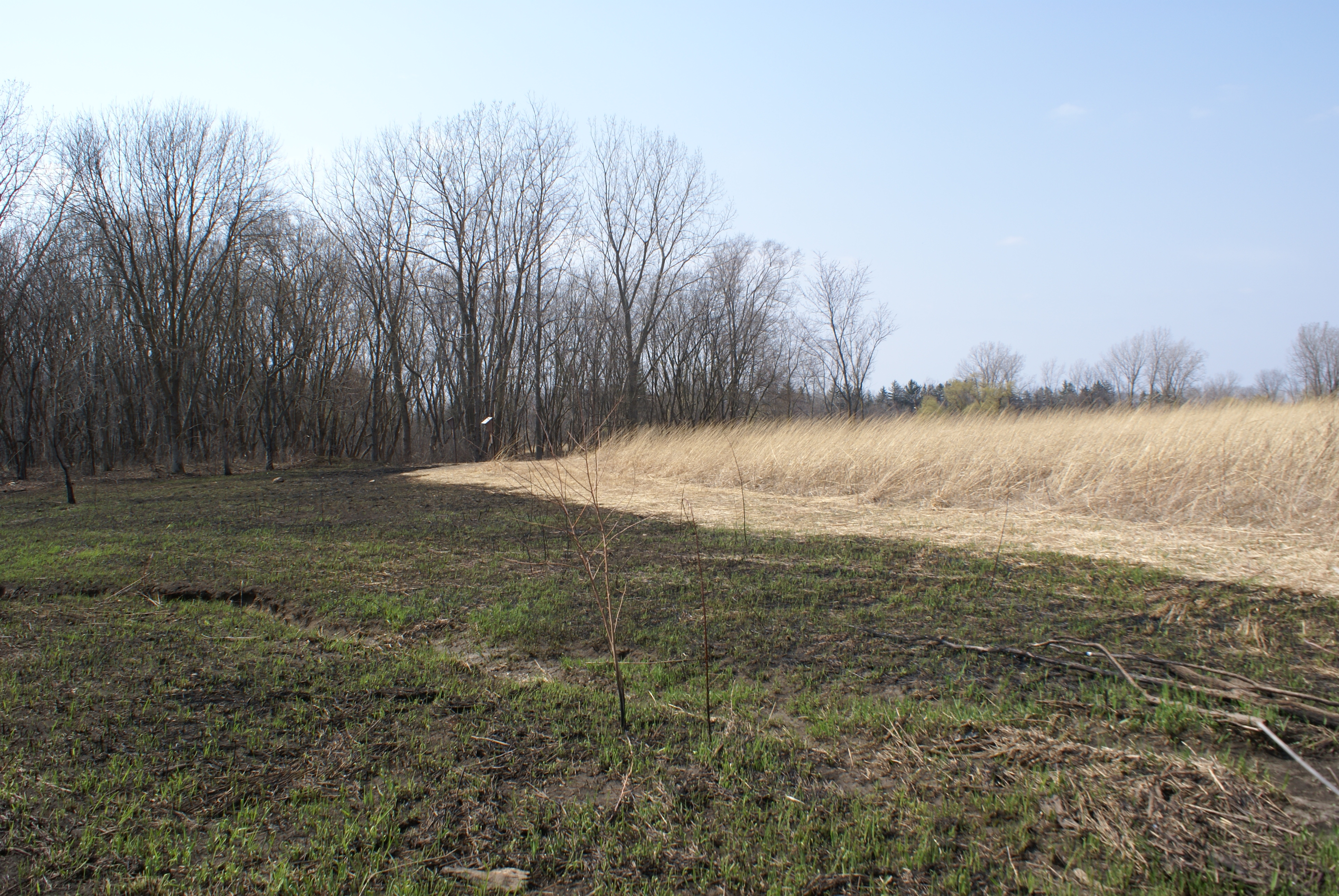 Local Conservation   Schaumburg's Sustainable Future