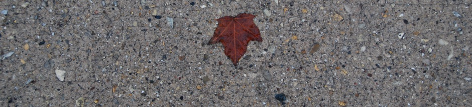 Radeck 16 - Maple_leaf_crop_horz_mbr_DSC_3246