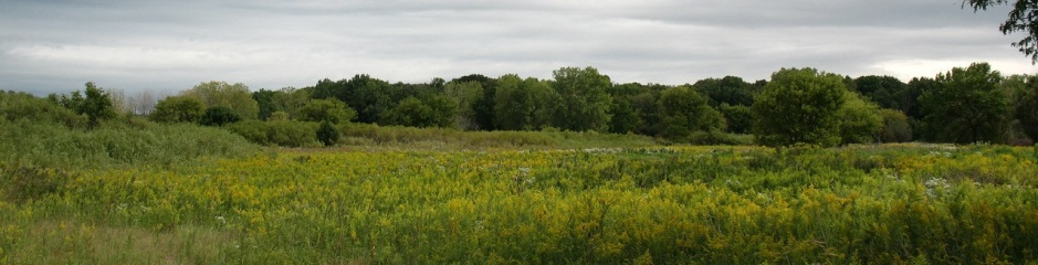 Busse Woods, part of the large-scale Ned Brown Forest Preserve in Cook County, directly east of Schaumburg  (M. Bryson, Sept. 2011)