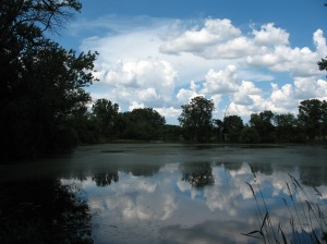 Wetland and pond at Spring Valley Conservation Area, Schaumburg IL (M. Bryson)