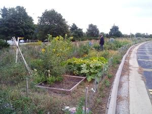 garden_plots (5)