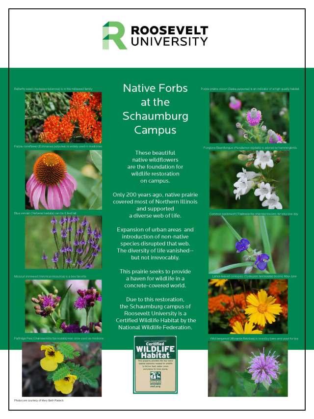Sch Campus NWF Prairie_Forbs_poster