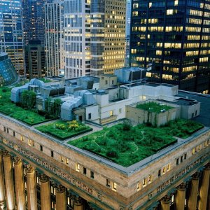 chicago--city-hall--green-roof_00096123
