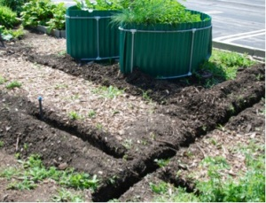 Trenches were dug in the RUrbanPioneers Community Garden in June 2014 for drip irrigation installation (photo: M. Radeck)