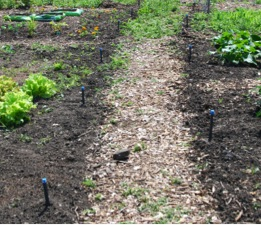Irrigation for each garden is in place, awaiting micro-tubing to each individual plant (photo: M. Radeck