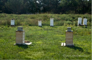 Picture of beehives and Kevin MacGregor