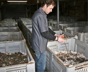 A vital process of composting is to monitor the temperature of the Bio-Bins. (Shown above: Michael Flood of Flood Brothers Disposal & Recycling Services). Courtesy of Rich Nickel, Daily Herald)