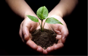 Compost: organic matter added to soil nourishes gardens and improves plant growth.