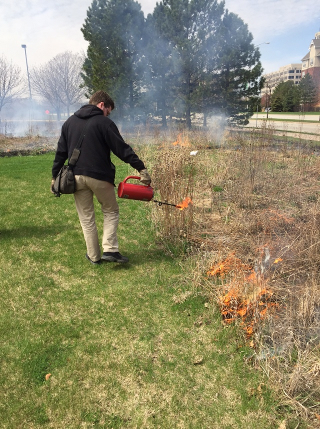 Weather conditions were good for the 3rd prescribed burn of the detention basin and restored prairie at RU's Schaumburg Campus